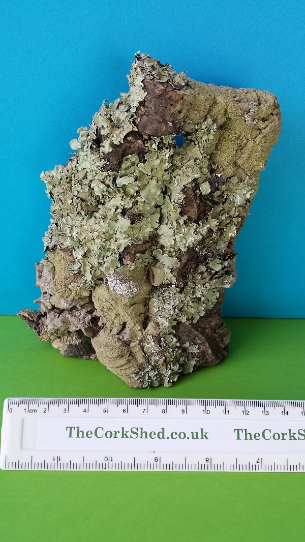 Cork Bark Rock Face WRF1